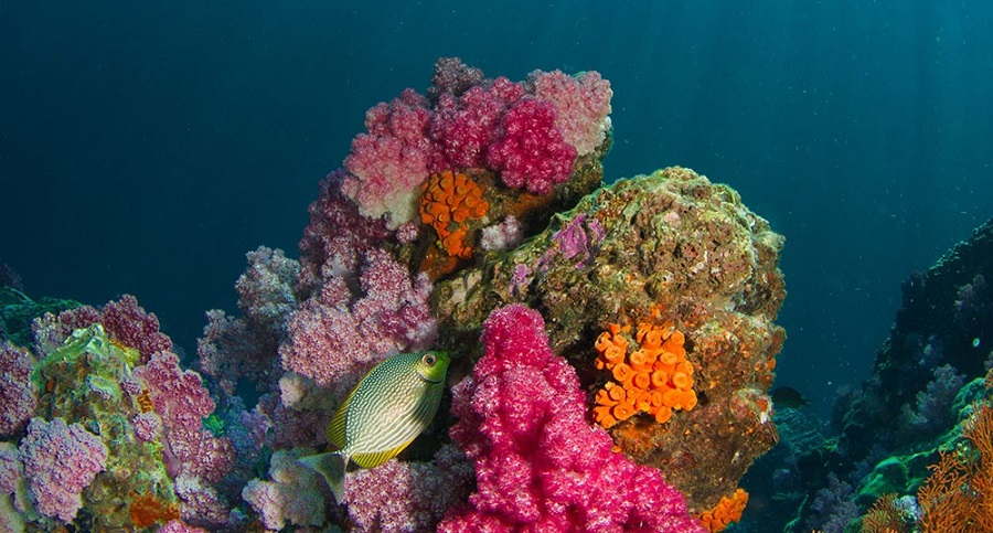 Coral e Outros Poemas